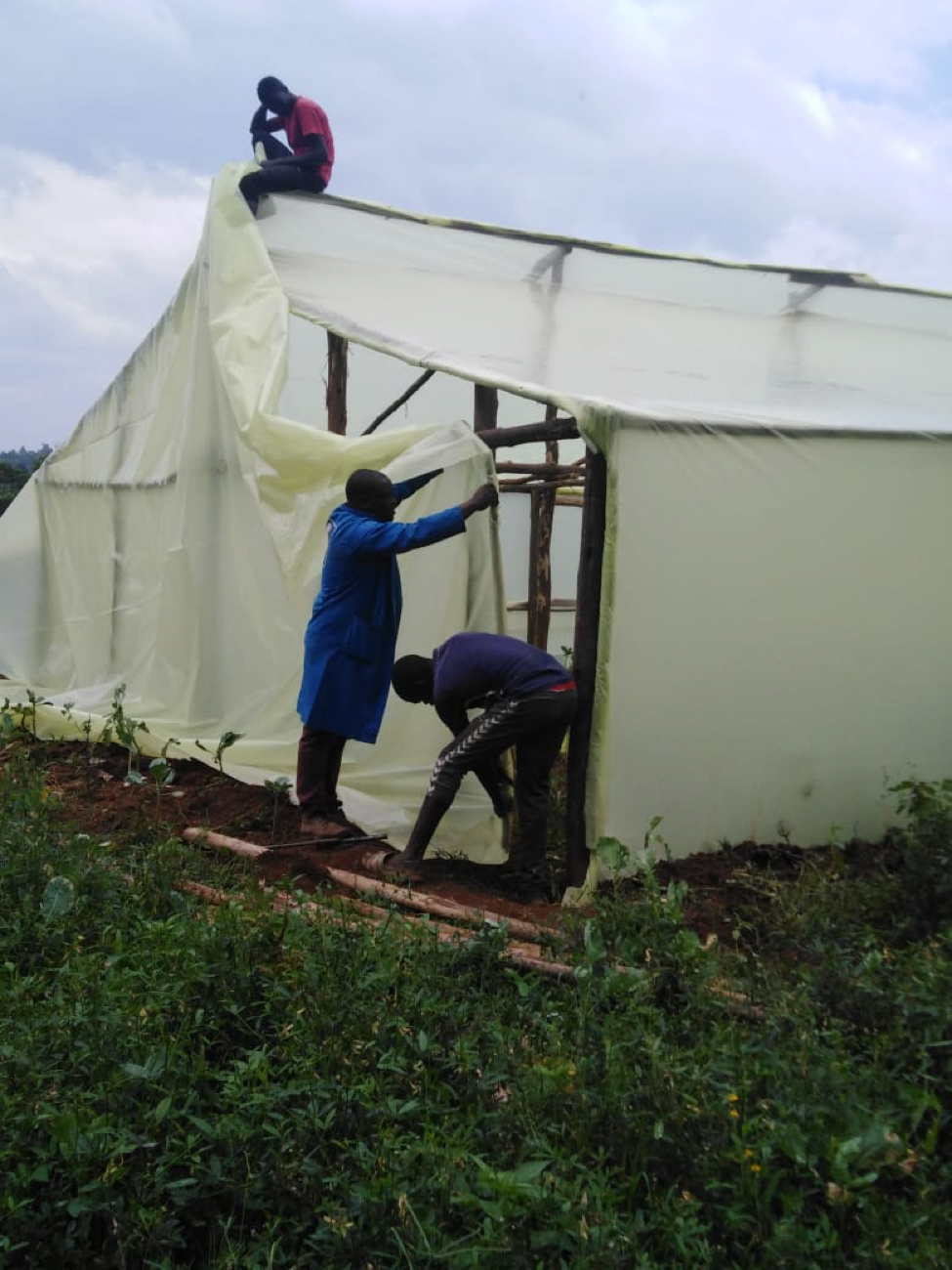 The Greenhouse Project in Musingu, rural Kakamega district is helping local small farmers to combat the devastating effects of exceptionally heavy rains alternating with periods of drought. The first polytunnel was erected in November 2020 amidst rising excitement in the local community. The soil has been prepared and 1000 seedlings are ready for planting. Following an initial training programme led by local experts, it will be run by the trainees as a cooperative venture. This has all been made possible by a generous grant from Quaker Peace and Social Witness. Over the next two years we hope to extend the programme with further groups of trainees building and managing additional greenhouses to generate an income for the farmers. It will be possible to grow a wider range of vegetables to improve the diet of the community. We hope that young people will now see agriculture as a good career choice.